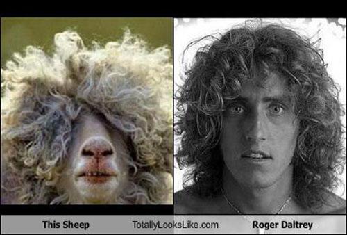 Roger Daltrey Sheep