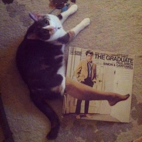 The Graduate Cat